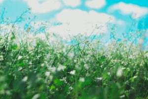 spring flowers that cause allergies